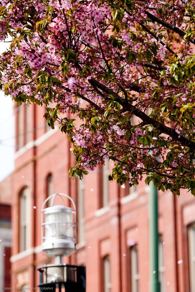 Spring_In_Lowell-1751.jpg