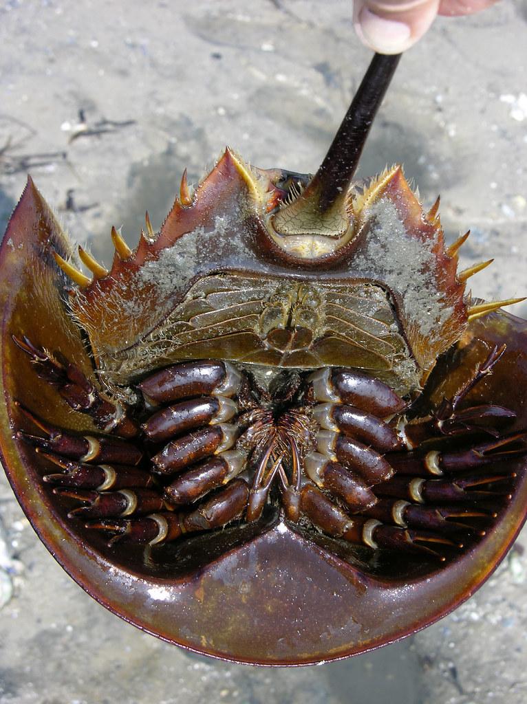Хойя  Hoya фото условия выращивания уход и размножение