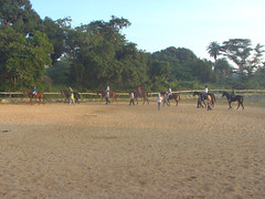 BMC Horse Riding Training (bishii) Tags: horse photos bangalore riding bmc palaceground