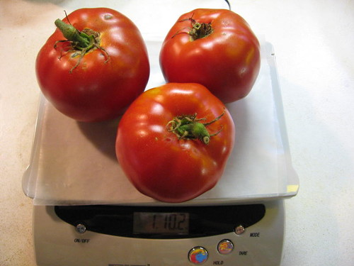 Tomatoes on scale