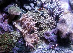 Melbourne - Victoria (Sandi1947) Tags: aquarium australia melbourne victoria