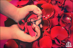 Happy Birthday 2 me :)  10\11 (FatoOoma Qatar ~) Tags: birthday camera pink november boy red baby white cute love rose canon logo kid flickr child hand heart romance romantic fav 18 fatma doha qatar 2007 1011 flickrcom 400d fatoooma