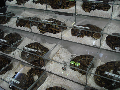 ball python cage is just one of the standard wants of a python to be ...