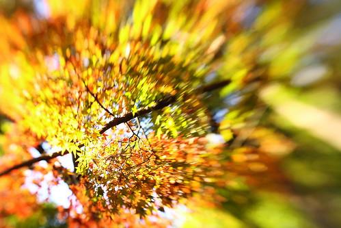 宮代の秋 -4- Lensbaby