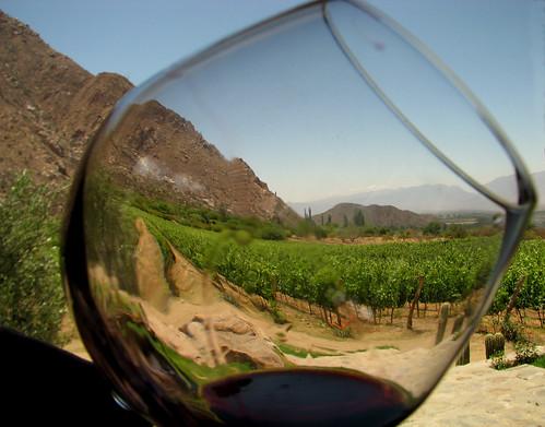 El viñedo y su fruto