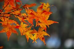 Autumn's scars