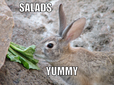 Salads - yummy