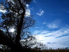 Nothing like blue skies (Kirsten M Lentoft) Tags: blue sky sun tree silhouette soe naturesfinest blueribbonwinner arresø anawesomeshot momse2600 irresistiblebeauty diamondclassphotographer naturewatcher kirstenmlentoft