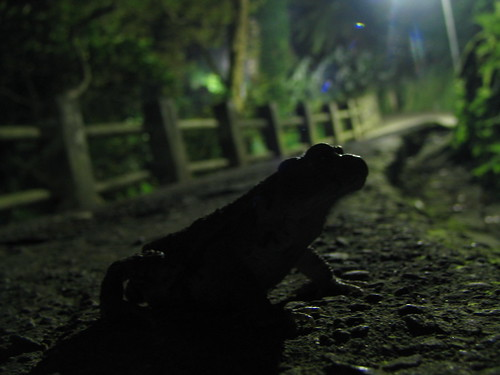 mr. toad