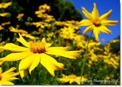 Happy Week!!  (Kelvin Wong (Away)) Tags: flowers nature flora dof bluesky adelaide monday botanicgarden firstquality aplusphoto kelvinwong piscesromance