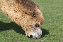 Longleat Safari Park #37