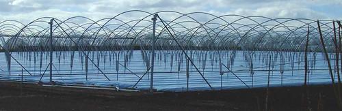 Galvanised steel frames of polytunnels