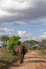 The Elephants of Tarangire (virtualwayfarer) Tags: tarangirenationalpark tarangire nationalpark wildlife animals wild safari adventuresafari photosafari canon dslr decembersafari tanzania africa tanzanian elephant elephants herd wildelephants mammal neverforget unforgettable africanelephant elephantinnature subsahara subsaharanafrica eastafricariftvalley riftvalley danger dangerous powerful large natgeoinpsired nationalgeographicinspired alexberger safariphotos adventuretravel solotravel travelinspiration photographyinspiration
