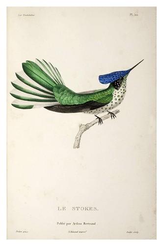 030-Les Trochilidées ou les Colibris et les Oiseaux-Mouches… 1832- René Primevère Lesson- DGZ–Göttinger Digitalisierungszentrum