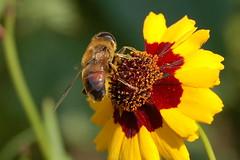One warm september noon... (mystic_mabel) Tags: holland netherlands dutch d50 thenetherlands naturesfinest superbmasterpiece buzzandbugz
