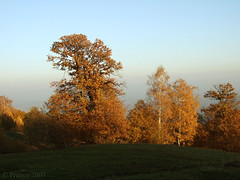 Colori Autunnali.....o1 (Franco foto) Tags: italy nature italia natura piemonte autunno montagna naturalmente naturesfinest boschi biellese fujis6500