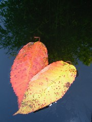 If you leave me now..., you'll take away the biggest part of me (valkiribocou) Tags: november blue autumn winter orange chicago france reflection love water leaves yellow jaune automne eau novembre heart amor hiver coeur bamboo bleu amour bambou feuille 1000views skyreflection rflection naturesfinest 2000views 10000views 5000views 15000views 3000views amazingtalent 4000views 6000views 10faves 7000views 8000views 9000views 16000views goldenmix 45faves ilovemypic platinumheartaward wonderfulworldmix macromix goldstaraward valkiribocou 100commentgroup rflxionduciel