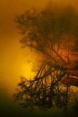 Take a Bow ( D L Ennis) Tags: mist misty fog reflections reflecting bravo foggy toned textured jamesriver takeabow supershot flickrsbest abigfave anawesomeshot treesubject dlennis diamondclassphotographer