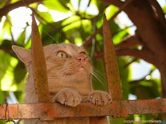 Sometimes it's hard to hang in! (roseinthedark) Tags: orange pet cat crazy furry funny lol blueribbonwinner 10favorites oreengeness anawesomeshot bestofcat lmaoanimalphotoaward happinessconservancy goldstaraward