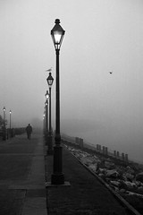 Fog over the Moonwalk (tricherson) Tags: light blackandwhite bw man bird film monochrome topv111 fog river mississippi louisiana alone moody seagull neworleans foggy photodomino repetition mississippiriver lone lonely riverbank moonwalk lightpost crescentcity humid msy birdinflight cotcmostfavorited challengeyouwinner photodomino544