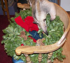 Stewie checks out the wreath
