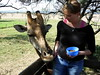 long tongue (jeneralized) Tags: africa giraffe lionpark