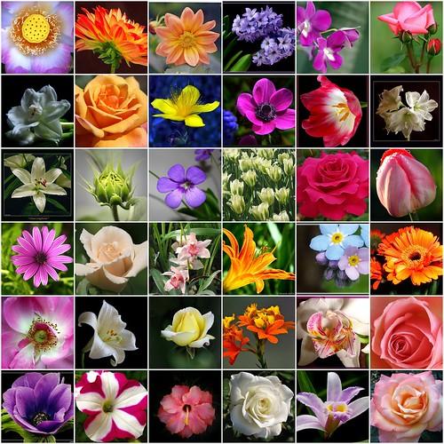 Flowers Wallpapers Photos All Flower Wallpaper