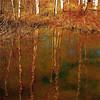 "My Wild Rivermark…!!! :))) (Denis Collette...!!!) Tags: canada reflection bravo quebec rivière reflet watermark enya themoulinrouge portneuf firstquality pontrouge ""deniscollette"" «wildriver» «rivièresauvage» world100f mirrorser"