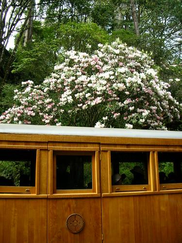 檜木車廂和高砂櫻