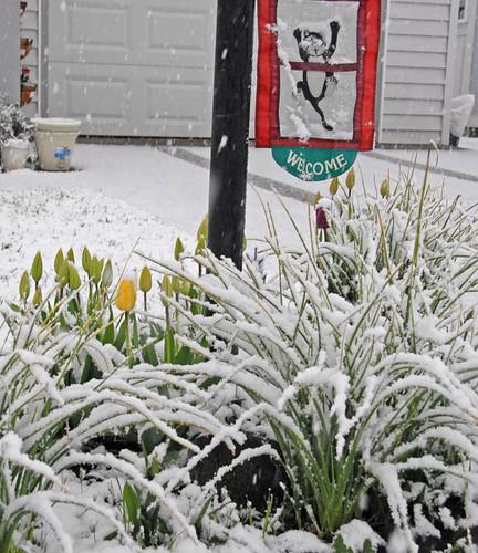 April snow 02