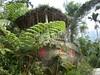 96.11.16竹崎鄉光華村茄苳風景區內的茄苳老樹DSCN3299