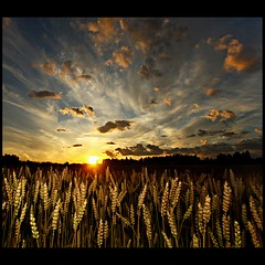 Painting by Camera (mackelundberg) Tags: sunset sun nature clouds wheat flash wide wideangle crops 40d aplusphoto theunforgettablepictures theperfectphotographer blogosophy mackepackeblogspotcom obramaestra