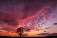 Crank......... (Digital Diary........) Tags: crank crankhill billinge tree solitary sunset goodlight canon fullframe sthelens merseyside uk