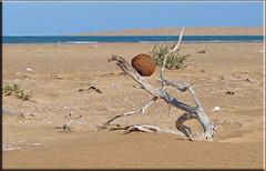 human legacy (mhobl) Tags: sahara mine desert morocco maroc strandgut naila blueribbonwinner westsahara lagunekhnifiss