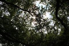 Sun Flare (Doc List Photography) Tags: sky sun tree austin texas flare splendiferous 123sky abigfave