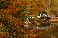 Fall Colors in Duke Gardens (Bill Gracey) Tags: autumn color reflection fall colors leaves durham fallcolors northcarolina explore dukegardens dukeuniversity explored favoritegarden diamondclassphotographer eyecandyart
