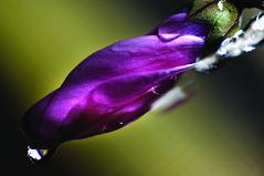 Jan's Flower... (TIO...) Tags: oneofakind parati excellence janoid respectfully heresmimbrava wheresmimbrava tiosstyle heytiogorgeouscolor