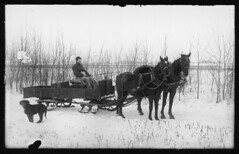 George Pascal II with team of horses (Special Collections Department, ISU Library) Tags: winter horses dogs 19thcentury agriculture sleds ruraliowa clintoncountyiowa pascalfamily georgepascalii descartespascal iowastateuniversitylibrary specialcollectionsdepartment