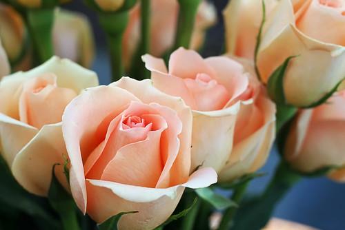 Outside-Roses