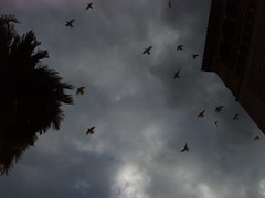 Los pajaros (dowaya) Tags: park parque light shadow sky cloud naturaleza tree nature leaves birds clouds digital hojas grey gris lights luces sevilla shadows darkness zoom dusk branches natureza olympus palmeras seville ciel pajaros cielo palmtree nubes contraste pajaro nuage nuvem rvore parc camedia cinza sombras oiseau nube palmier pajarito c60 entardecer oscuridad oscuro palmeira ramas tombe