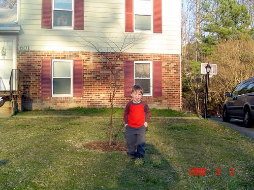 aarons tree