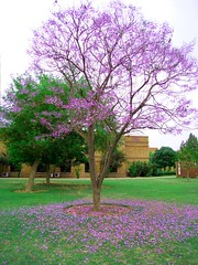 Spring colours (Sana A) Tags: pakistan colour tree spring sana lums agboatwala