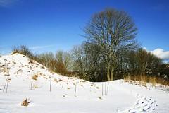 the hill near kristiansten (pupepp's) Tags: norway trondheim gandi pupung