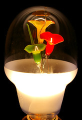 flower lamp - lit