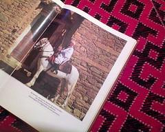 Livre sur tapis du Djebel - amour ( Algeria) (Opusbey) Tags: horse algeria brida aflou laghouat