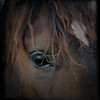 wild horses (-justk-) Tags: copyright horse animals thesundays thelittledoglaughed allmyimagesarecopyrighted©allrightsreserveddonotusecopyandeditmyimageswithoutmypermission
