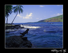 Blackberry's Favorite Spot To Swim and Dive-Manini Beach-Oct 2007 (R. J. Malfalfa) Tags: blue dog beach dogs rain relax island hawaii crazy rocks blackberry blues palm hawaiian excellent romantic ripples slack capture dakine bliss kealakekua aloha kona blades 2007 labradors kailua bigislandhawaii excellence dabomb holualoa honaunau kealakekuabay bekind bestofhawaii konahawaii flickrsbest hookena mywinners shieldofexcellence malfalfa kindstuff malfalfaoriginal hawaiiphotos windsandandwater coolestphotographers excapture hawaiihighschool hawaiiweddings aaaaloha alohagroup romantichawaii