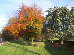 trees November 008