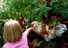 Ellie with chicken