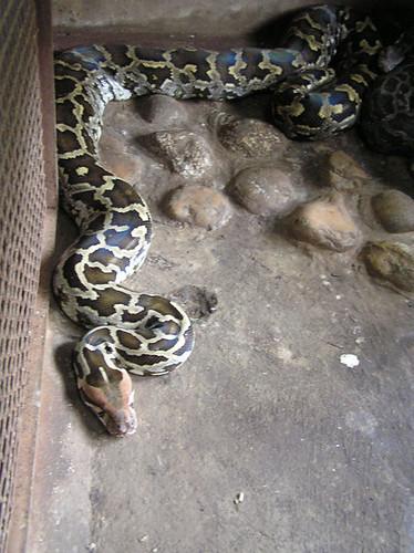 Python date from string in Brisbane